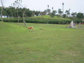 草地奔跑.jpg
