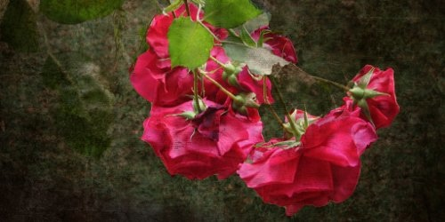 Van Cleef %26; Arpels梵克雅寶:初綻玫瑰 Rose Velours 13.jpg