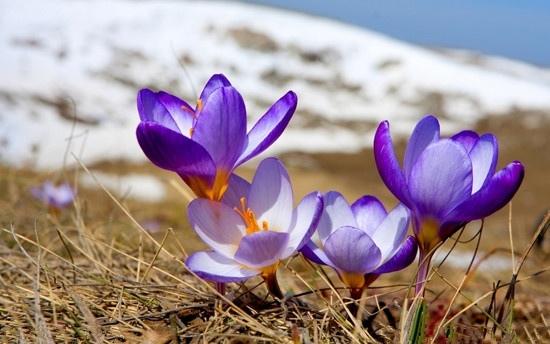 proad saffron vanilla 11.jpg