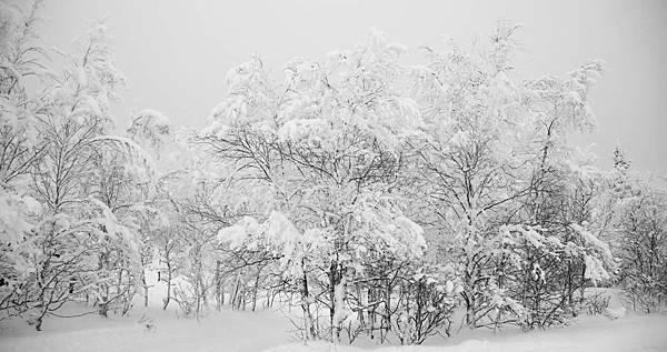 Frederic Malle L'eau d'Hiver:冬之水 5.jpg