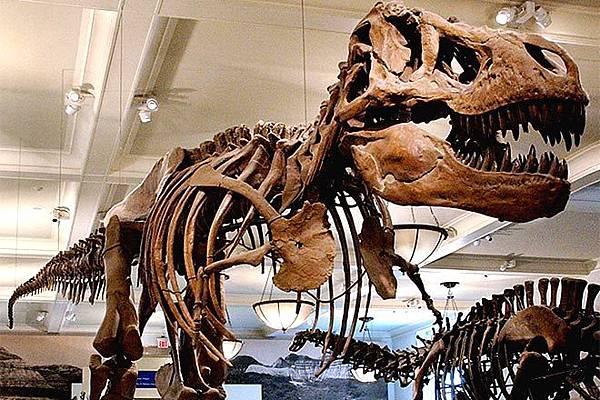 【Zoologist】Tyrannosaurus Rex (霸王龍)12.jpg