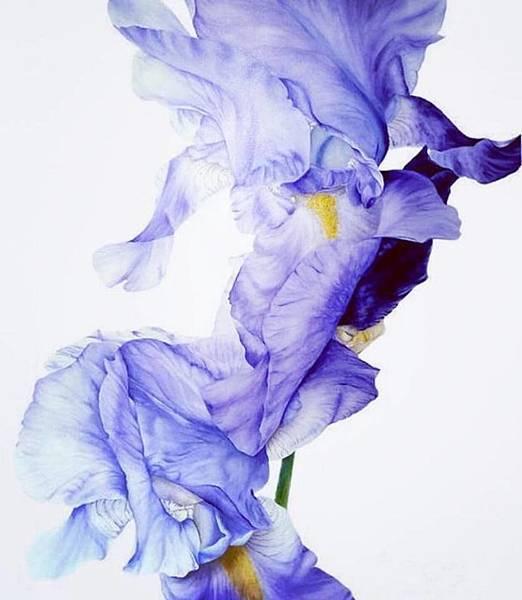 【April Aromatics】Irisistible (不可抗拒的鳶尾)7.jpg