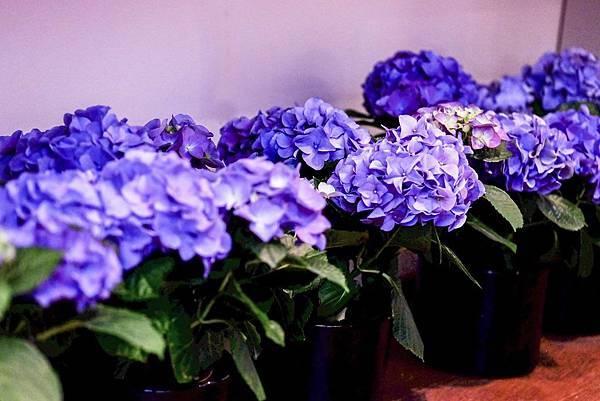 【Parfums Dusita】Splendiris (謎漾之花)3.jpg