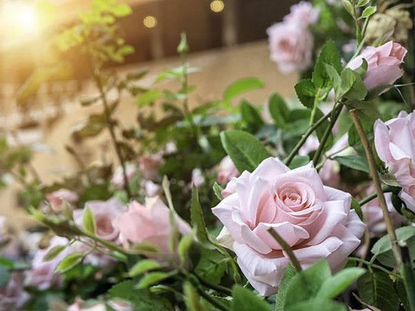 【fresh】Rose Morning (晨曦玫瑰)3.jpg