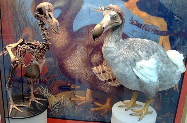 【Zoologist Perfumes】Dodo (渡渡鳥)3.jpg