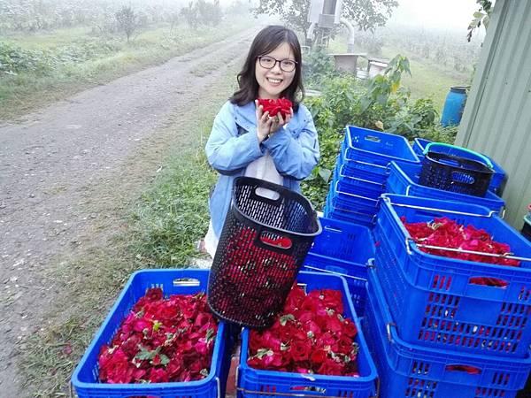 【Kimature】Rose Polyphenols (玫瑰多酚)3.jpg