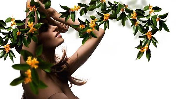 【Roger %26; Gallet】Fleur d'Osmanthus (中國桂花)3.jpg