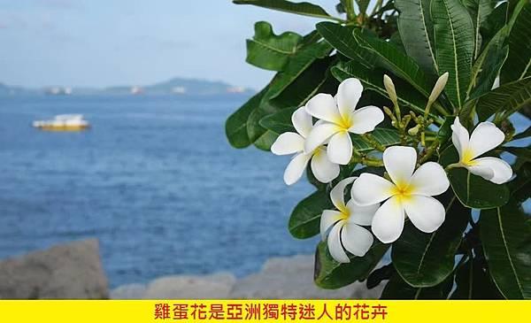 【Areej Le Doré】Plumeria de Orris (雞蛋花)2.jpg