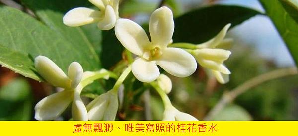 【Demeter® Fragrance Library】Tea Olive (桂花)3.png