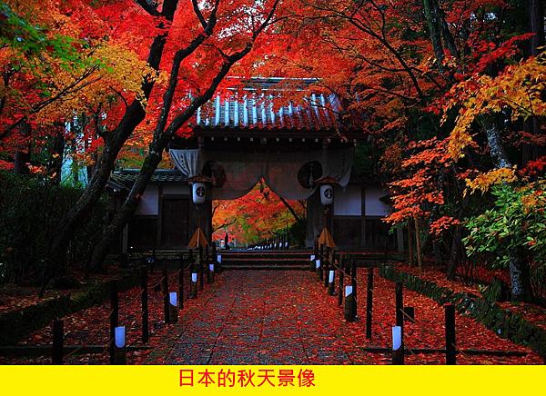 【PARFUM SATORI】ソネットSonnet (桂花的十四行詩)9.png