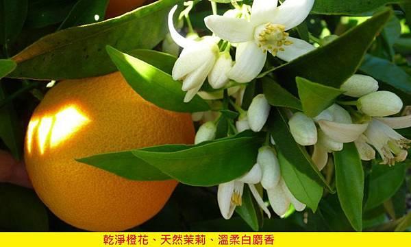【Evody Parfums】Fleur d'Oranger (愛戀橙花)4.jpg