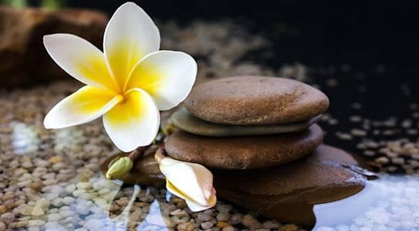 【Fueguia 1833】Flores Negras (南島的雞蛋花)5.jpg