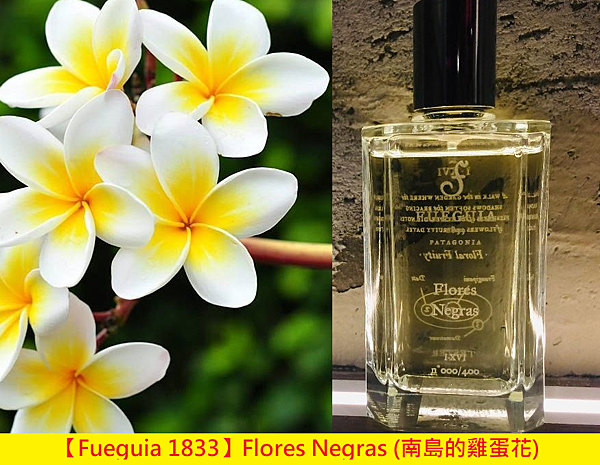 【Fueguia 1833】Flores Negras (南島的雞蛋花)1.png