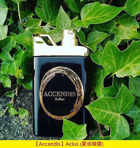 【Accendis】Aclus (夏夜精靈)1.jpg