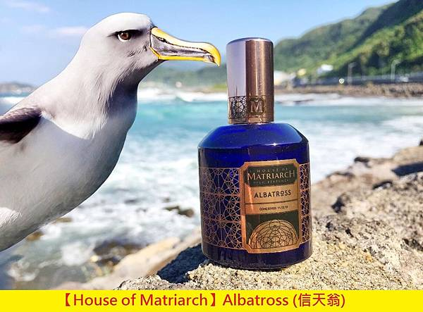 【House of Matriarch】Albatross (信天翁)1.jpg