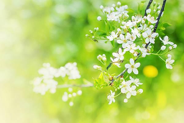 【Eric Buterbaugh】Future Bloom (未來花)2.jpg
