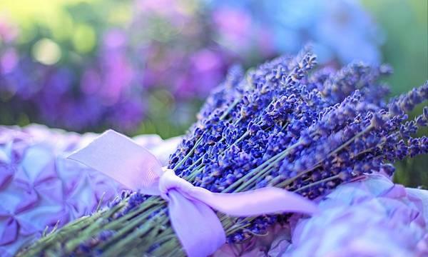 【April Aromatics】Lavandeluce (微醺衣草)4.jpeg