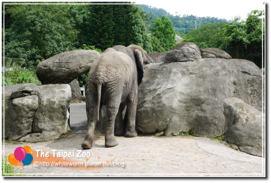 動物園012