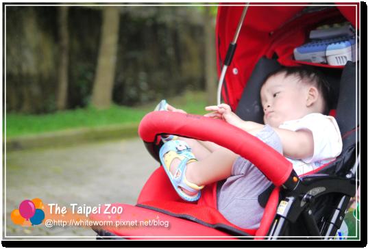 動物園015