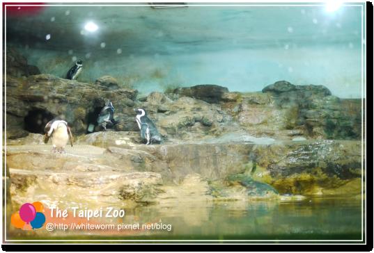 動物園017