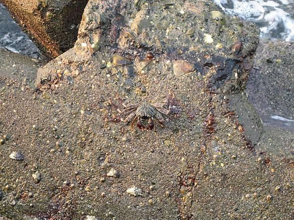 路邊的螃蟹