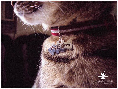 貓咪佩帶.jpg