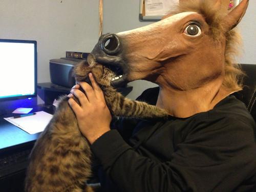 horse masks