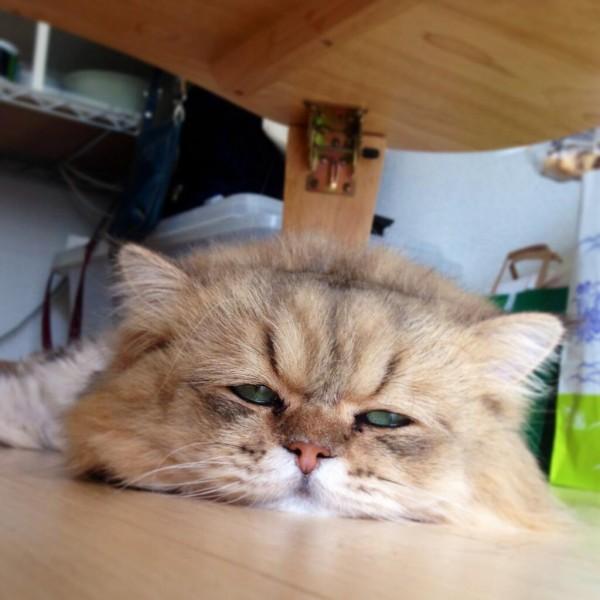 fuu-chan-japan-cat