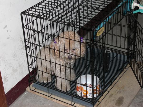 牠在籠子裡等食物