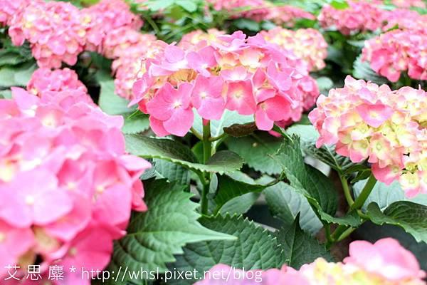 藥花園-1.JPG