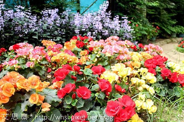 藥花園-10.JPG
