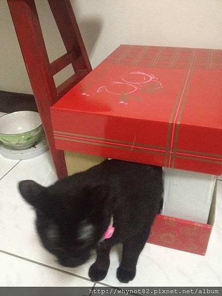10請黑貓來示範.jpg