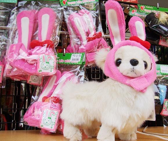 小狗裝兔子.jpg