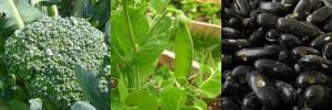 陽台DIY種植10種最有營養價值的蔬菜