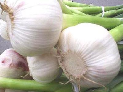 大蒜的營養價值高於人參