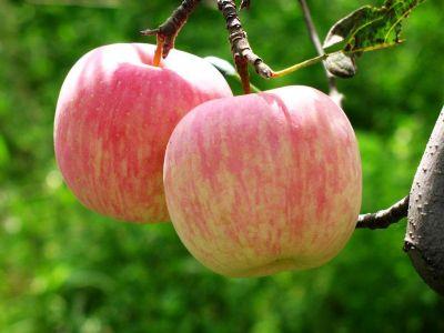 膽固醇過高如何吃 蘋果