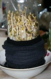 自己種豆芽,5天就可以收穫!