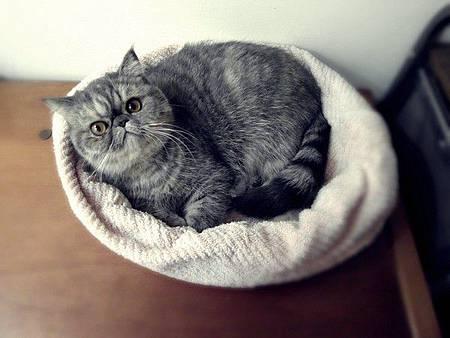 貓奴超強省錢術!用浴巾和毛毯DIY自製 超溫暖貓床