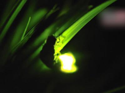 台灣生態全台30大賞螢火蟲地點