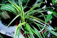 plant_18.jpg