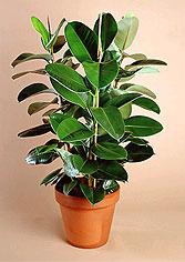 plant_4.jpg