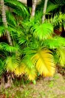 plant_1.jpg