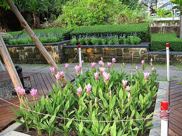 台中植物園外圍植物