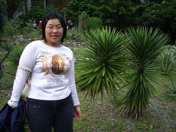 刺刺植物前