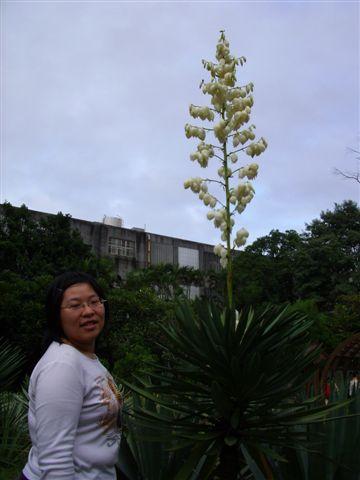 好高的植物