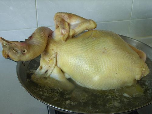 你拍攝的 大閹雞。