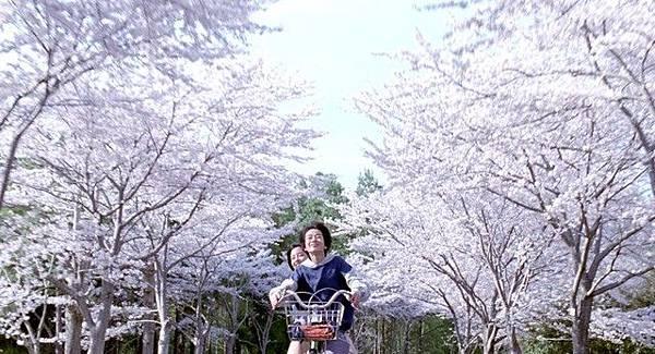 umimachi-diary-sakura.jpg
