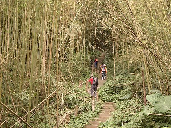 竹林間的步道