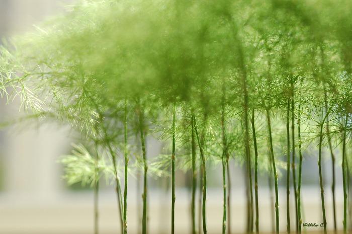 見樹不見林