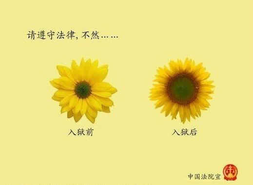 法院文宣-菊花
